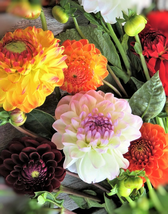 dahlia bouquet for wedding day