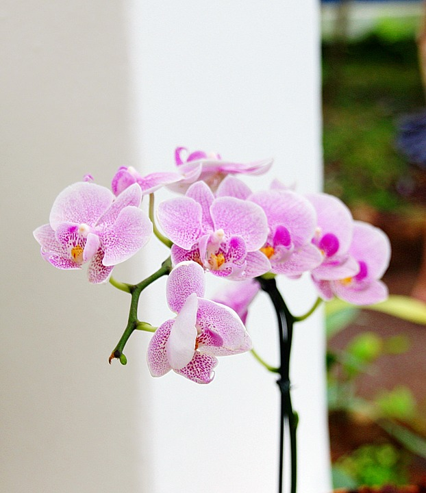 Pink orchid flower for wedding day