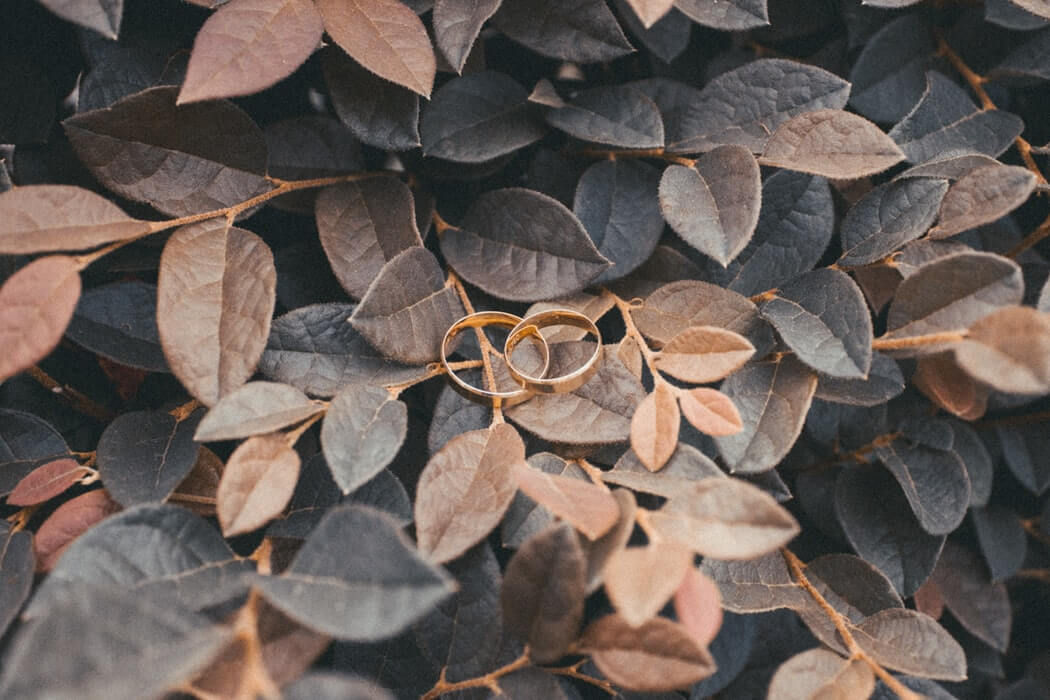 Wedding rings on leafy background
